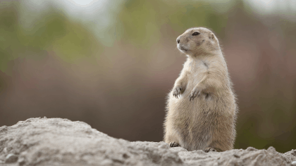 Why Starting Your New Year on Groundhog Day Works